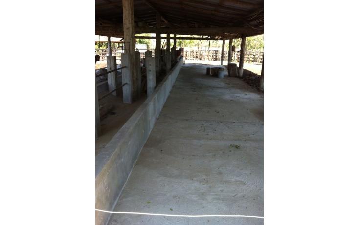 Foto de rancho en venta en  , pijijiapan centro, pijijiapan, chiapas, 1474289 No. 07