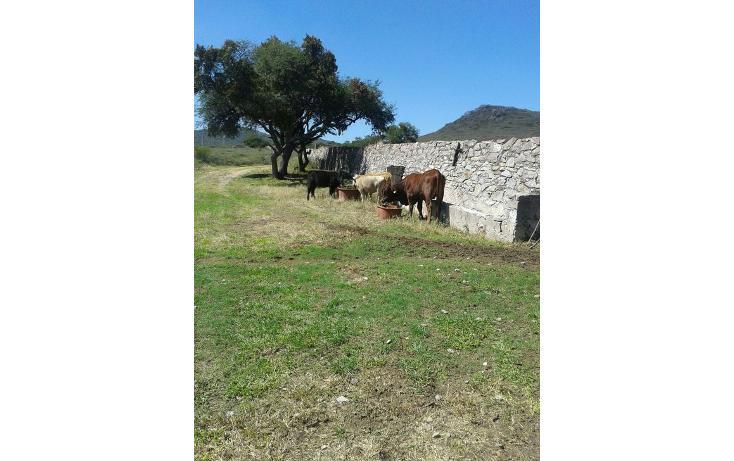 Foto de terreno habitacional en venta en  , pita, corregidora, querétaro, 1061445 No. 34