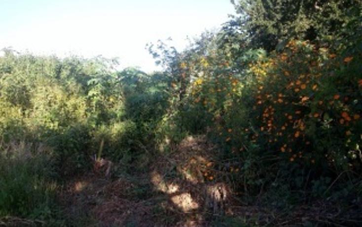 Foto de terreno habitacional en venta en  , plan de oriente, san pedro tlaquepaque, jalisco, 1856250 No. 05