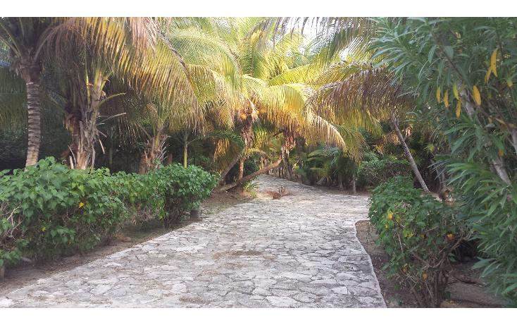 Foto de terreno comercial en venta en  , playa del carmen centro, solidaridad, quintana roo, 1207531 No. 03