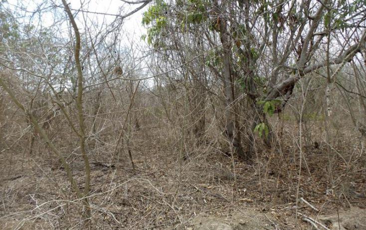 Foto de terreno habitacional en venta en potrero de limon, azalea, mazatlán, sinaloa, 2040092 no 02