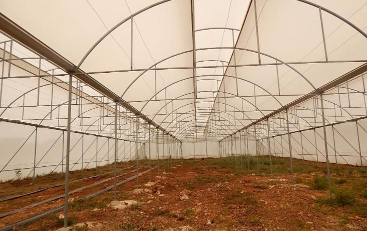 Foto de terreno comercial en venta en  , poxila, umán, yucatán, 1291113 No. 01