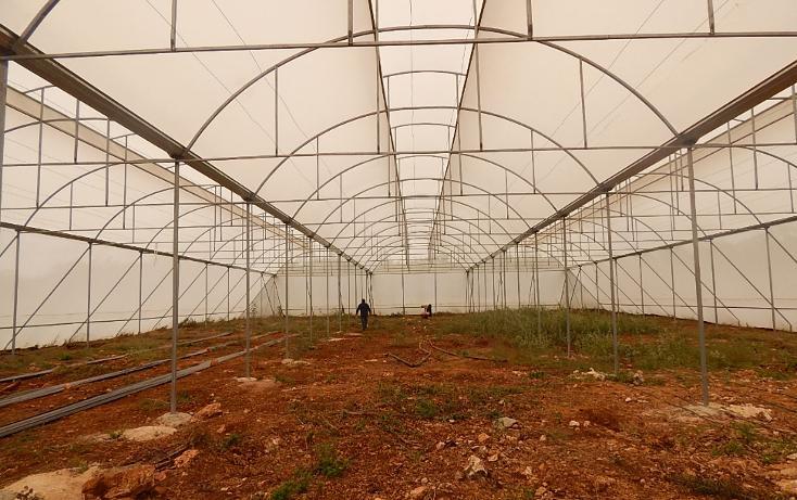 Foto de terreno comercial en venta en  , poxila, umán, yucatán, 1291113 No. 02