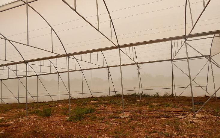 Foto de terreno comercial en venta en  , poxila, umán, yucatán, 1291113 No. 04