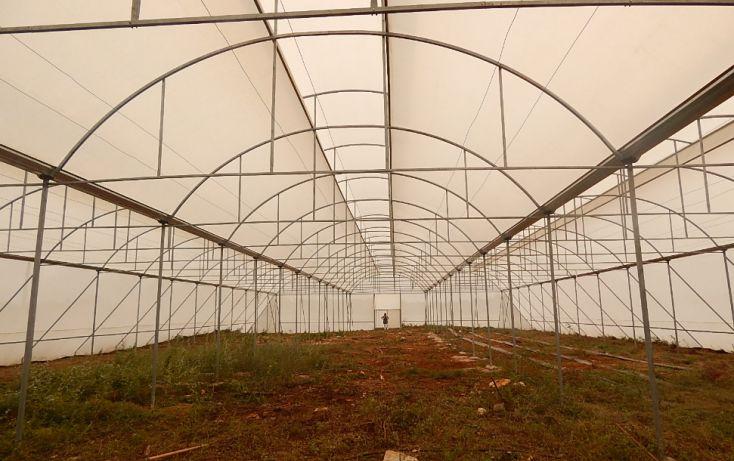 Foto de terreno comercial en venta en, poxila, umán, yucatán, 1291113 no 06