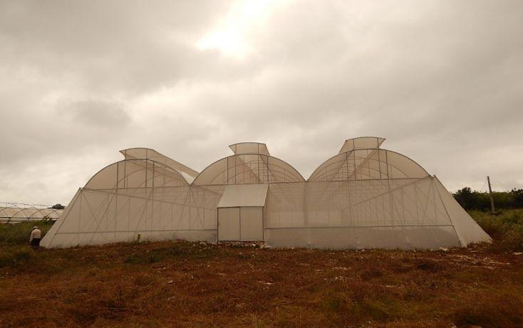 Foto de terreno comercial en venta en, poxila, umán, yucatán, 1291113 no 07