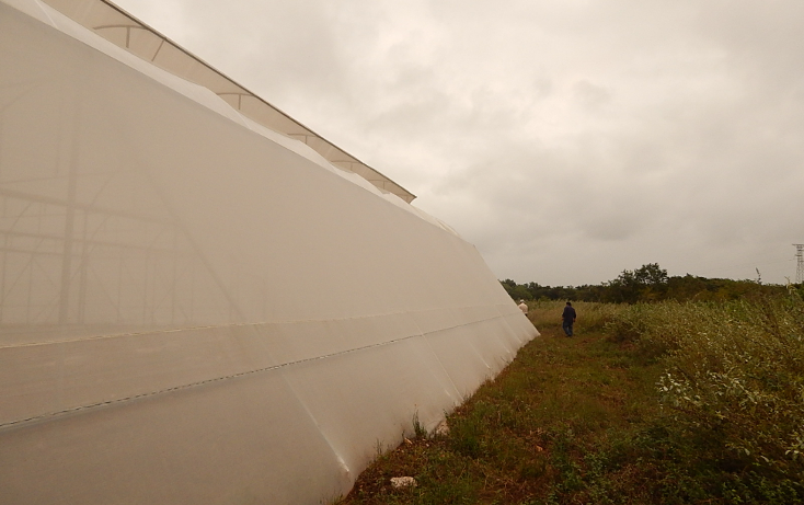 Foto de terreno comercial en venta en  , poxila, umán, yucatán, 1291113 No. 08