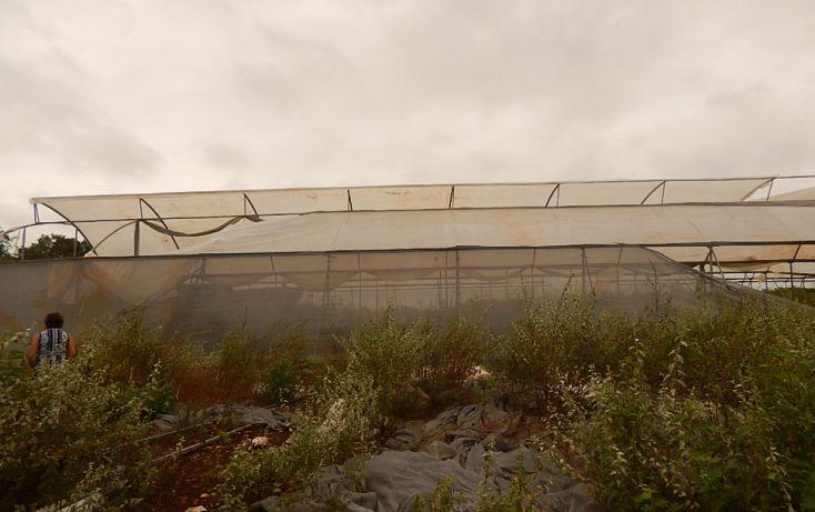Foto de terreno comercial en venta en, poxila, umán, yucatán, 1291113 no 10