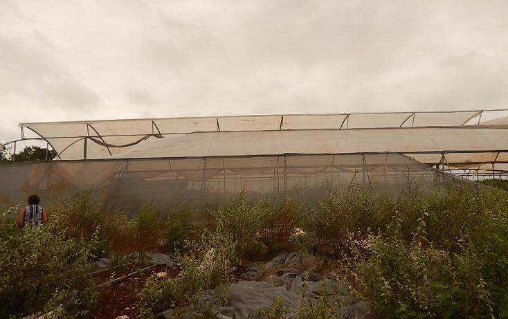 Foto de terreno comercial en venta en  , poxila, umán, yucatán, 1291113 No. 10