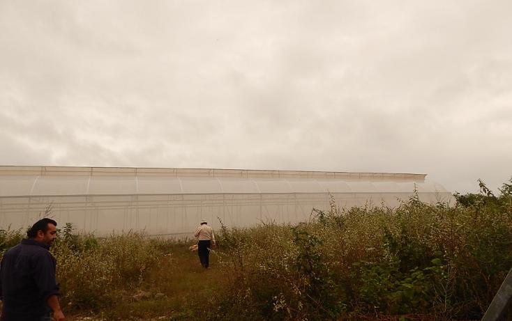 Foto de terreno comercial en venta en  , poxila, umán, yucatán, 1291113 No. 11