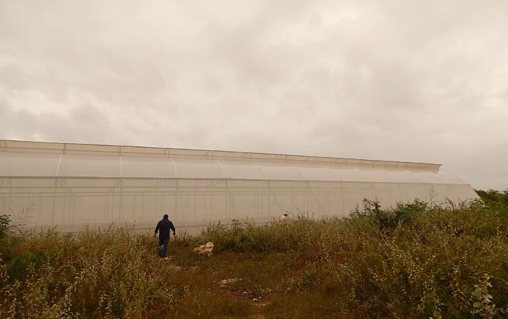 Foto de terreno comercial en venta en  , poxila, umán, yucatán, 1291113 No. 12