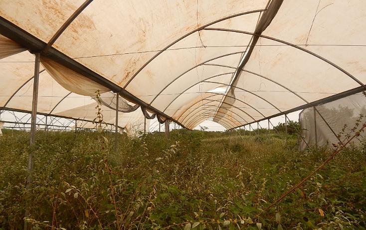 Foto de terreno comercial en venta en  , poxila, umán, yucatán, 1291113 No. 13