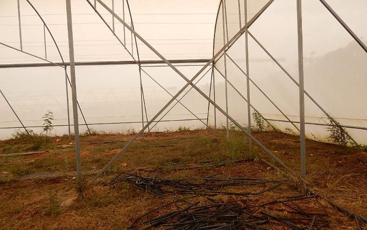 Foto de terreno comercial en venta en  , poxila, umán, yucatán, 1291113 No. 16