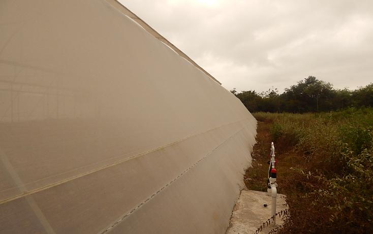 Foto de terreno comercial en venta en  , poxila, umán, yucatán, 1291113 No. 24
