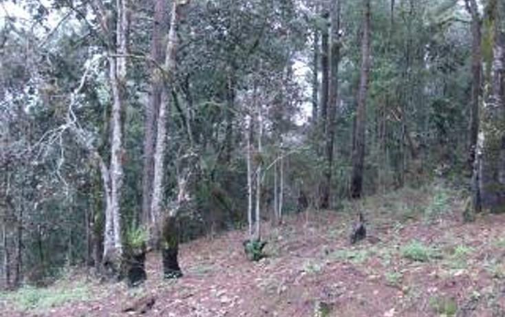 Foto de terreno habitacional en venta en predio rústico las flores s/n , san felipe ecatepec, san cristóbal de las casas, chiapas, 1715840 No. 07