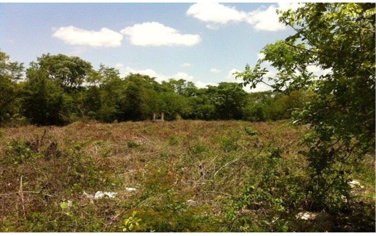 Foto de terreno habitacional en renta en  , progreso de castro centro, progreso, yucatán, 1249109 No. 01