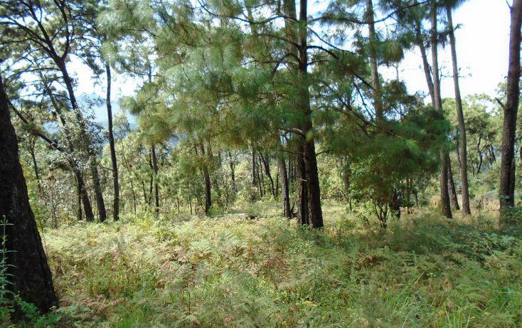 Foto de terreno habitacional en venta en pueblo sn, valle de bravo, valle de bravo, estado de méxico, 1698024 no 01