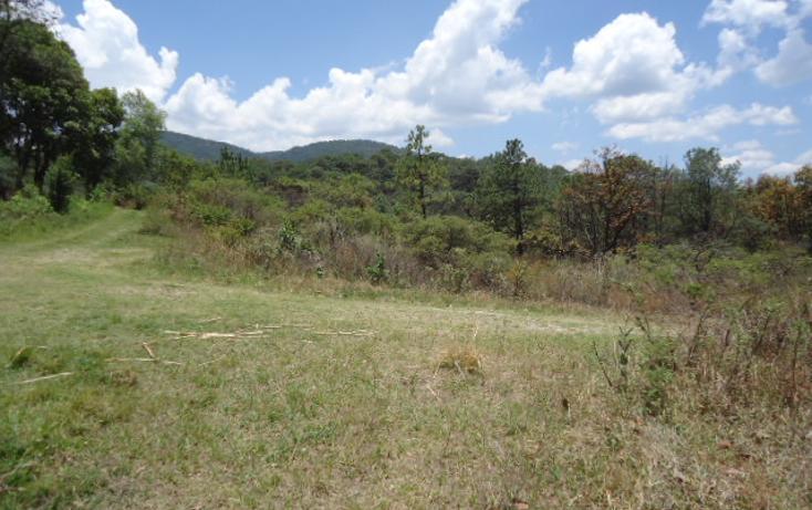 Foto de terreno habitacional en venta en  , valle de bravo, valle de bravo, méxico, 1698020 No. 06