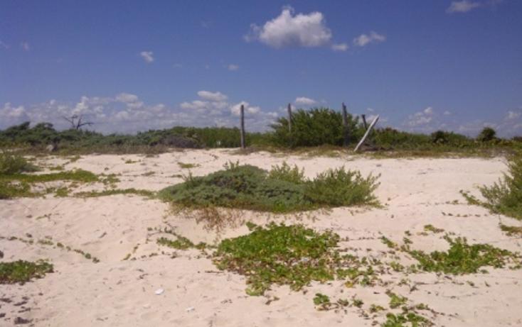 Foto de terreno comercial en venta en  , puerto morelos, benito juárez, quintana roo, 1062565 No. 08