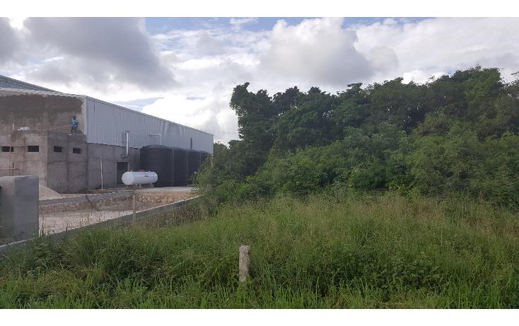 Foto de terreno comercial en venta en  , puerto morelos, benito juárez, quintana roo, 1071697 No. 04
