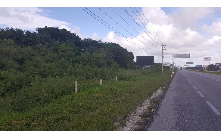 Foto de terreno comercial en venta en  , puerto morelos, benito juárez, quintana roo, 1071697 No. 05