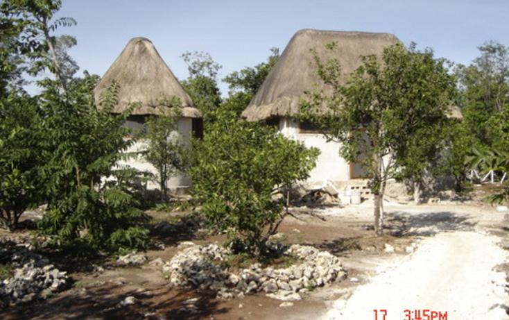 Foto de terreno habitacional en venta en  , puerto morelos, benito juárez, quintana roo, 1078363 No. 01