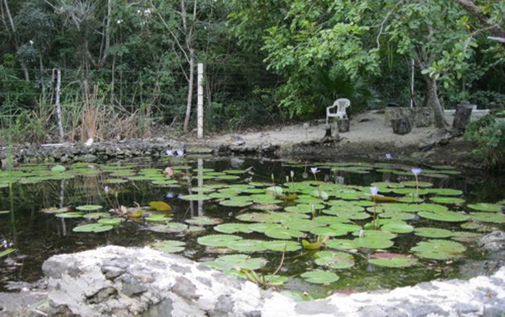 Foto de terreno habitacional en venta en  , puerto morelos, benito juárez, quintana roo, 1078363 No. 02