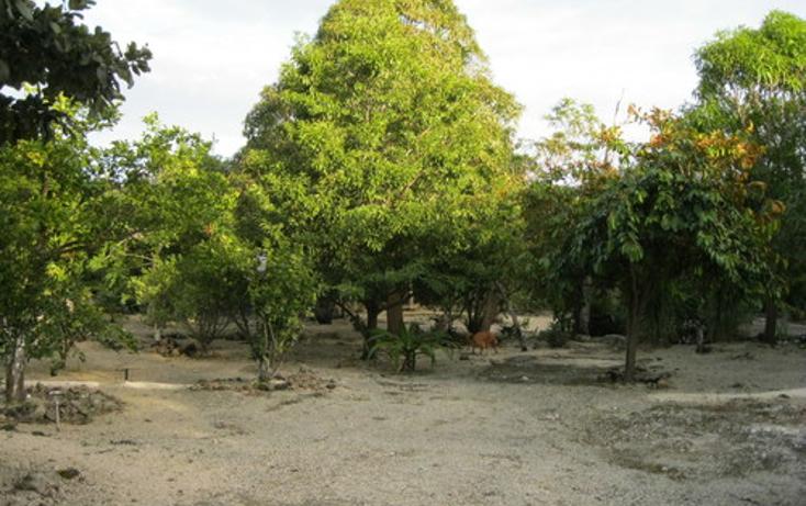 Foto de terreno habitacional en venta en  , puerto morelos, benito juárez, quintana roo, 1078363 No. 04