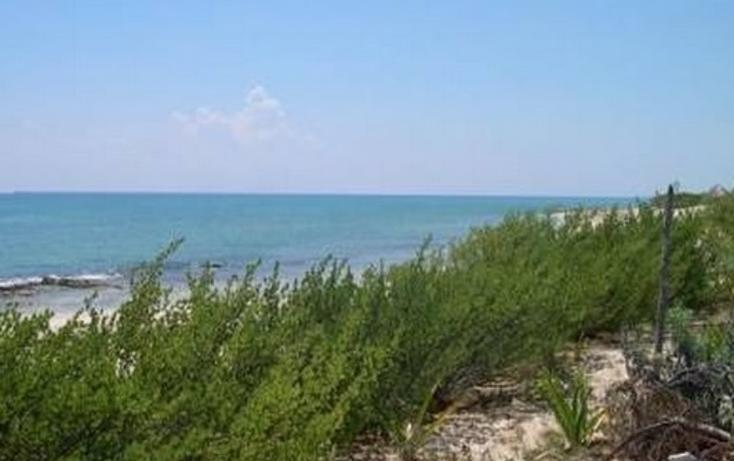 Foto de terreno comercial en venta en  , puerto morelos, benito ju?rez, quintana roo, 1101465 No. 06