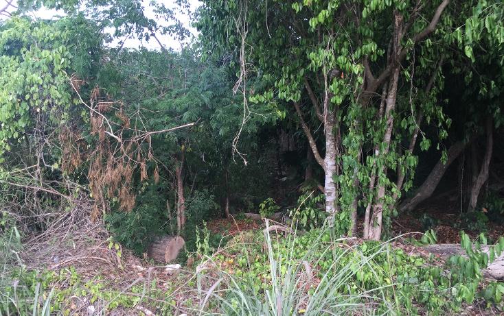 Foto de terreno comercial en venta en  , puerto morelos, benito ju?rez, quintana roo, 1347641 No. 02