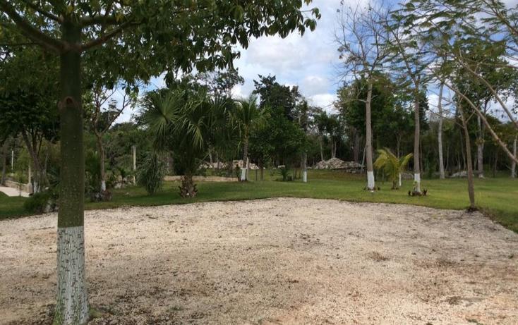 Foto de terreno comercial en venta en  , puerto morelos, benito juárez, quintana roo, 1577522 No. 05