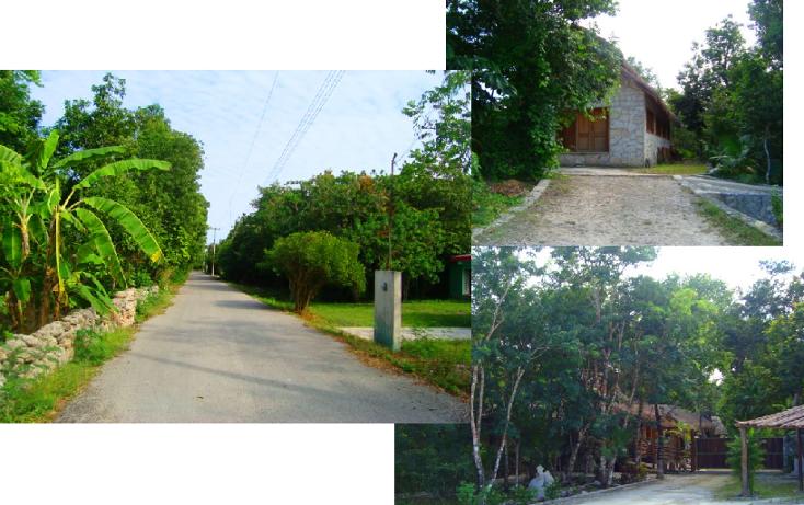 Foto de terreno habitacional en venta en  , puerto morelos, benito juárez, quintana roo, 1947952 No. 02
