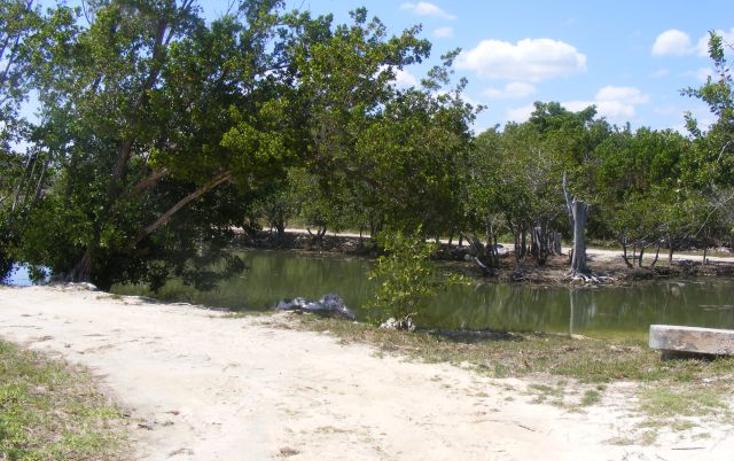 Foto de terreno habitacional en venta en  , puerto morelos, benito juárez, quintana roo, 2642914 No. 08