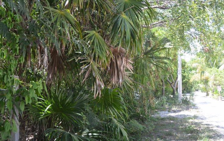 Foto de terreno habitacional en venta en  , punta chenyunyun, solidaridad, quintana roo, 1430601 No. 05