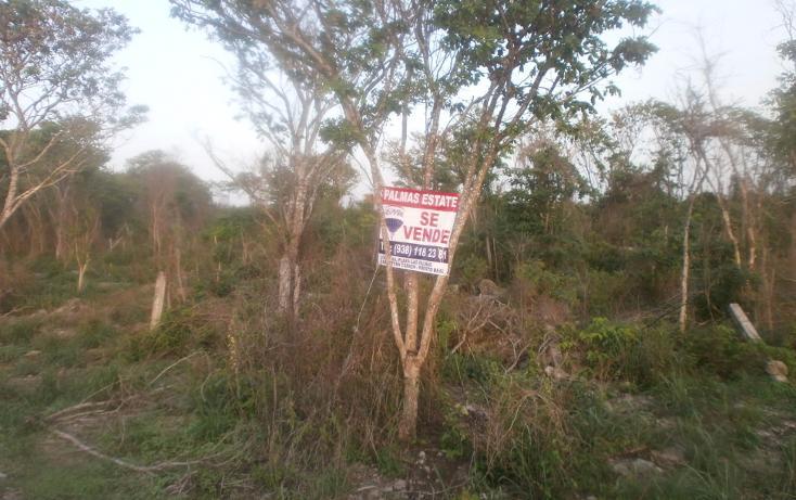 Foto de terreno habitacional en venta en  , punta xen, champotón, campeche, 1286941 No. 15