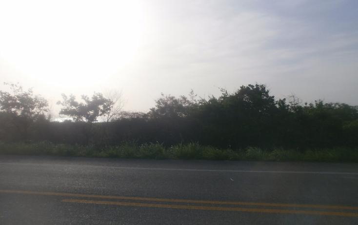 Foto de terreno comercial en venta en  , punta xen, champotón, campeche, 1286965 No. 07