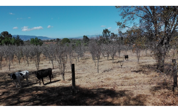 Foto de rancho en venta en  , ranchito de ruano, polotitlán, méxico, 1258929 No. 01