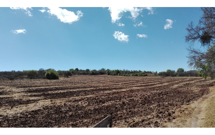 Foto de rancho en venta en  , ranchito de ruano, polotitlán, méxico, 1258929 No. 03