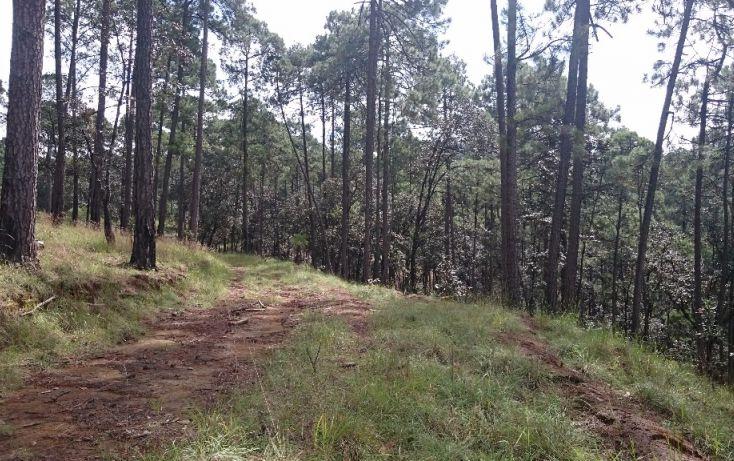 Foto de terreno habitacional en venta en rancho avándaro sn, avándaro, valle de bravo, estado de méxico, 1697920 no 04