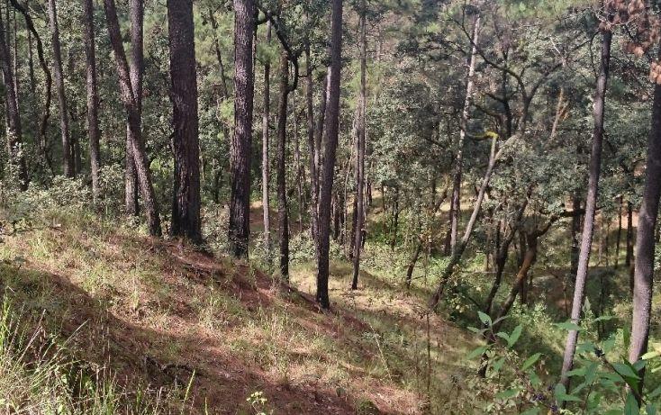 Foto de terreno habitacional en venta en rancho avándaro sn, avándaro, valle de bravo, estado de méxico, 1697920 no 17