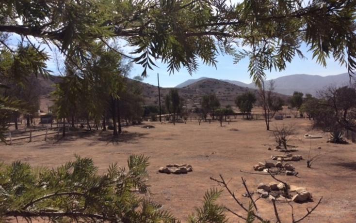 Foto de rancho en venta en  , rancho gandul, tecate, baja california, 1484987 No. 05