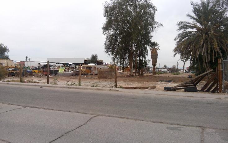 Foto de terreno comercial en venta en  , rancho la bodega, mexicali, baja california, 1207553 No. 04
