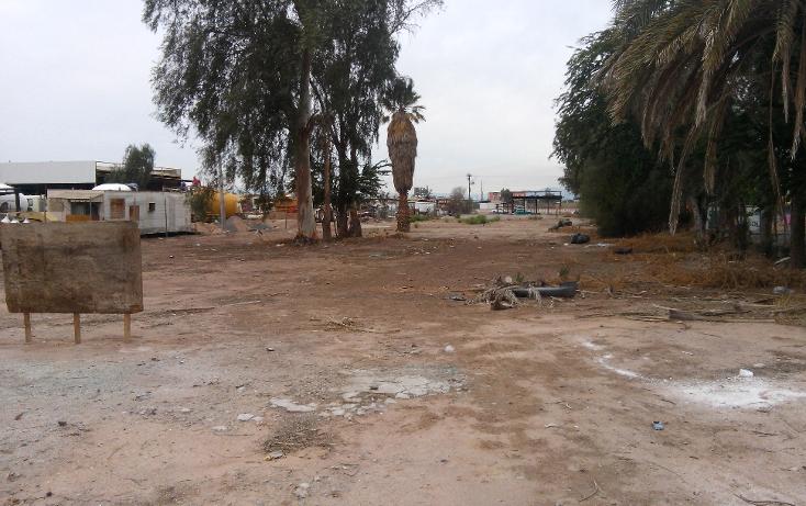 Foto de terreno comercial en venta en  , rancho la bodega, mexicali, baja california, 1207553 No. 07