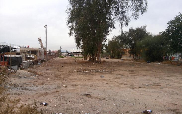 Foto de terreno comercial en venta en  , rancho la bodega, mexicali, baja california, 1207553 No. 09