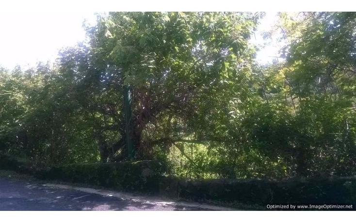 Foto de terreno habitacional en venta en  , rancho tetela, cuernavaca, morelos, 1122593 No. 05