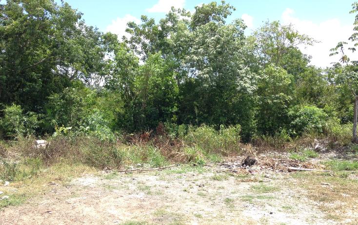 Foto de terreno comercial en venta en  , región 103, benito juárez, quintana roo, 2628784 No. 07