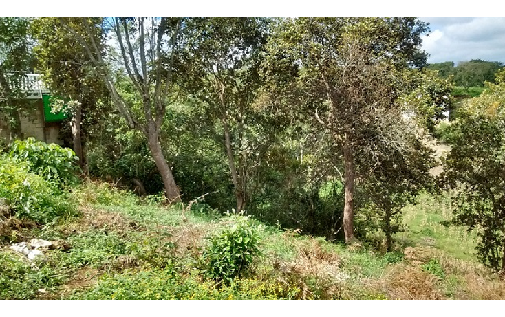Foto de terreno habitacional en venta en  , reserva territorial, xalapa, veracruz de ignacio de la llave, 1296213 No. 03