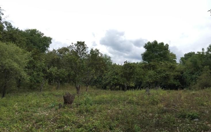 Foto de terreno habitacional en venta en  , rincón de estradas, valle de bravo, méxico, 829603 No. 05