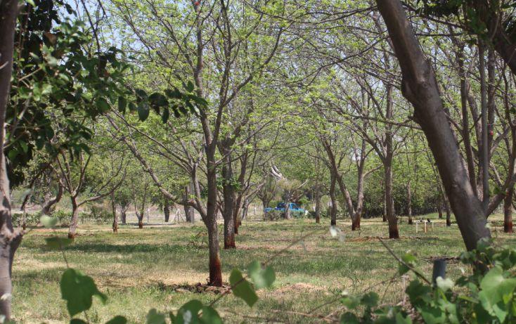 Foto de terreno habitacional en venta en, rincón del montero, parras, coahuila de zaragoza, 1857646 no 07