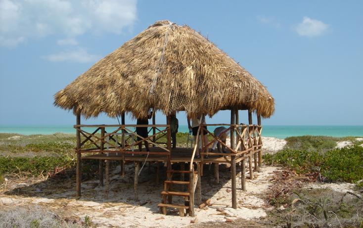 Foto de terreno habitacional en venta en  , rio lagartos, río lagartos, yucatán, 1069219 No. 01